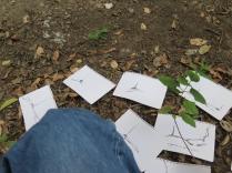 Leña del árbol caído 2
